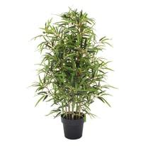 Albero bamboo