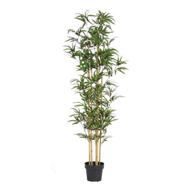 Albero erba naturale