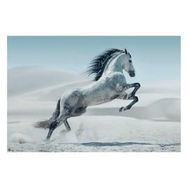 Poster Cavallo Andaluso 91,5 x 61 cm