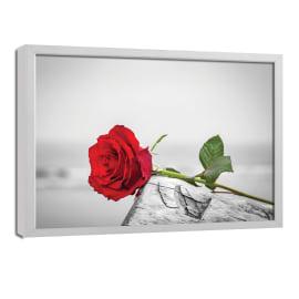 quadro su tela Rosa 65x85