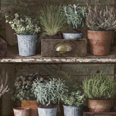 Carta da parati piante aromatiche multicolor 10 m prezzi e for Carta da parati catalogo online