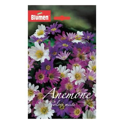 Bulbo Anemone Blanda colori assortiti confezione da 60