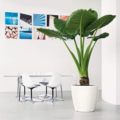 Vaso Classico Premium LECHUZA in plastica bianco H 40 Ø 43 cm